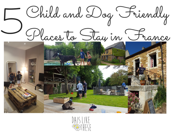 5-child-and-dog-friendly-4